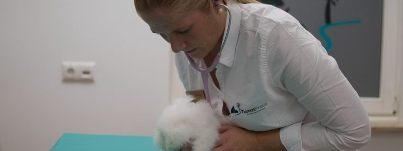 https://www.erlangen-tierarzt.de/wp-content/uploads/2020/12/tierarztpraxis-kleintier-800x300.jpg