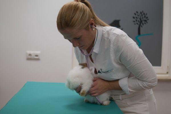 https://www.erlangen-tierarzt.de/wp-content/uploads/2020/12/tierarztpraxis-schwabachgrund-kleine-heimtiere-600x400.jpg